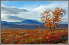fjell | Autumn on Dovrefjell, a photo from Oppland, South | TrekEarth