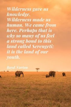 """Wilderness gave us knowledge. Wilderness made us human. We came from here. Perhaps that is why so many of us feel a strong bond to this land called Serengeti; it is the land of our youth."" * Boyd Norton (American wildlife photographer) #travel #safari #Africa #quotes #sayings #inspirational #wilderness #wildlife #plains #Serengeti #elephants"