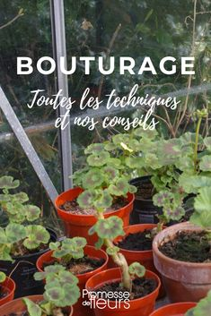 Le bouturage - tout savoir You are in the right place about Vegetable Garden trellis Here we offer you the most beautiful pictures about the Vegetable Garden diy you are looking for. Garden Trellis, Garden Planters, Organic Gardening, Gardening Tips, Gardening Quotes, Vegetable Gardening, Diy Jardim, Different Plants, Garden Care