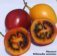 Roots 'n' Shoots: Tamarillo (Tree Tomato) - How to Grow: Fruit of the Month