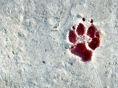 Fish & Wildlife Service wise to oppose Alaska's 'war on wolves' for refuges Dark Fantasy, Fantasy Art, Twilight, Alaska, Arte Obscura, Six Of Crows, Sansa Stark, Character Aesthetic, The Villain