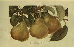 Vintage Botanical Prints, Botanical Drawings, Botanical Art, Vintage Art, Floral Illustration, Sculpture, Art Techniques, Botany, Garden Ideas
