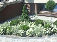 Moje małe wielkie marzenie - strona 117 - Forum ogrodnicze - Ogrodowisko