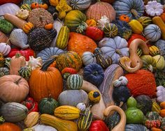pumpkin–patch:  Autumn Harvest Jigsaw Puzzle 1000 Piece   Regardless of what humans have come to think about it,  Nature definitely celebrates diversity.
