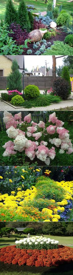 Растения для клумбы: цветы с названиями и фото