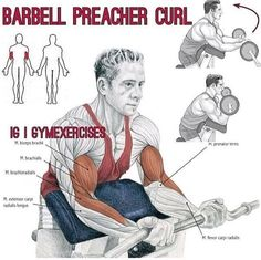 Technique exercises on the simulator Biceps - Preacher Curl Bench ❌WRONG VS ✅RIGHT ✳️Muscle: Biceps ✳️Type : isolation ✳️Sets : 4 ✳️Reps : 12 ✳️Rest: 60 sec Biceps Workout, Gym Workouts, Fitness Exercises, Preacher Curls, Arm Day, Back And Biceps, Weight Lifting, Weight Loss, Exercise Workouts