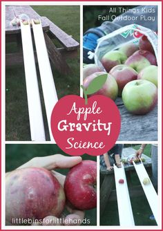 Apple Gravity Science Experiment And Outdoor Fall Apple Play. Explore ramps, angles, slopes, motion and more with a simple kid's physics activity Gravity Experiments, Gravity Science, Science Experiments Kids, Science For Kids, Science Activities, Science Projects, Science Centers, Science Ideas, Class Projects