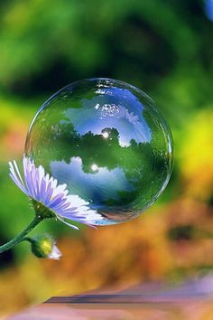 Bubbles and flower