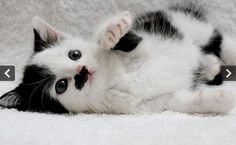 Amentior: Hitler cat 'overlooked for adoption because of markings'