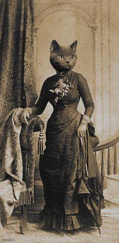 Vctorian cat in dress