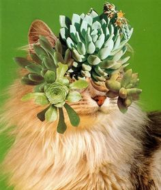 Stephen Eichhorn : Cats and Plants