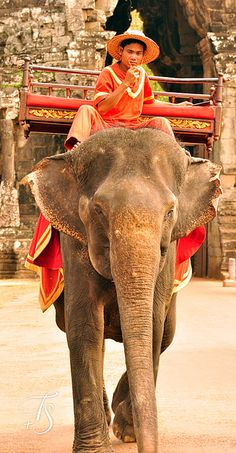 I would die of happiness if I was able to ride on an elephant! They are such beautiful and magnificent creatures.