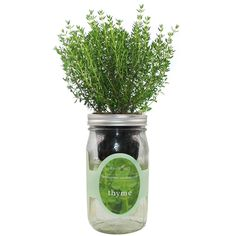 Environet Hydroponic Herb Growing Kit, Self-Watering Mason Jar Herb Garden Starter Kit Indoor, Grow Your Own Herbs from Seeds (Thyme)- Buy Online in India at desertcart.in. ProductId : 224567022. Mason Jar Herbs, Mason Jar Herb Garden, Herb Garden In Kitchen, Mason Jars, Hydroponic Growing, Hydroponic Gardening, Hydroponics, Mint Plants, Grow Kit