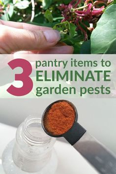 3 Household Items to Keep Your Garden Pests at Bay