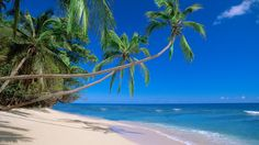 Fiji. Who wouldn't want to be here