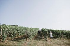 Sweetheart photos in the vineyard- Pippin Hill wedding pre-ceremony
