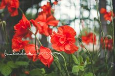 Meet the Barneys, floral, poppies, rain photography, family photo ideas, family photography, rain photo, family