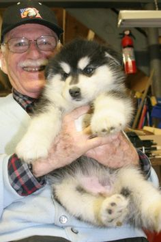 I want this mini bear of a dog