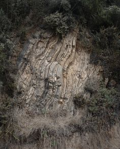Here we have a fold found along a trail in Strawberry Canyon just east of the University of California, Berkeley and the Hayward fault.
