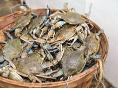 Image result for crabbing Augusta w Artichoke, Vegetables, Image, Food, Meal, Eten, Veggie Food, Hoods, Vegetable Recipes