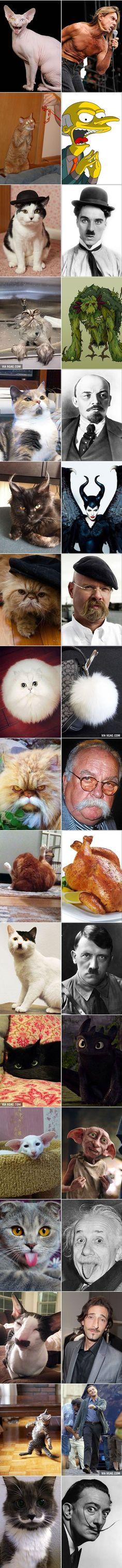 Bei diesen 18 Katzen muss man genau hinsehen, denn hier besteht Verwechslungsgefahr!