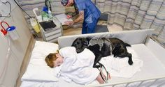 """LOYAL DOG REFUSES TO LET BOY GO TO HOSPITAL WITHOUT HIM  """"SAVE A DOG AND SAVE A VETERAN"""". TRAINING RESCUE/SHELTER DOGS TO SERVE AS SERVICE DOGS FOR CIVILIANS AND, FREE, FOR U.S. VETERANS. www.DogEvolution.us (Service Dog Training) (http://dogtrainingorang"""