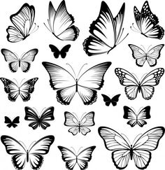 Tattoo sketches 159385274298106337 - set of butterflies silhouettes isolated on white background in vector format very easy to edit, individual objects Source by garancevoyageus Butterfly Tattoo Meaning, Butterfly Tattoo On Shoulder, Butterfly Tattoo Designs, Tattoo Outline Drawing, Outline Drawings, Dog Outline, Drawing Stencils, Tattoo Stencils, Butterfly Sketch
