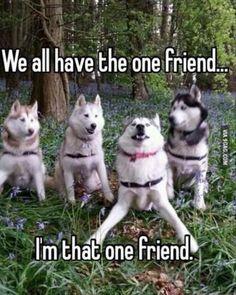 Funny Animal Jokes, Funny Dog Memes, Crazy Funny Memes, Really Funny Memes, Cute Funny Animals, Cute Baby Animals, Funny Dogs, Haha Funny, Fun Funny