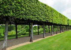 Oak hedge in Hatfield House East Garden Formal Garden Design, Garden Landscape Design, Landscape Architecture, Large Backyard Landscaping, Modern Landscaping, Garden Hedges, Home And Garden Store, Formal Gardens, Dream Garden