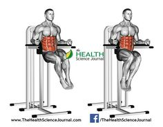 Oblique Raises on Parallel Bars. Oblique Raises on Parallel Bars. Exercising for bodybuilding Target muscles are marked in red royalty free illustration Sixpack Abs Workout, Best Ab Workout, Gym Workout Tips, Abs Workout For Women, Fat Workout, Workout Fitness, Muscle Fitness, Fitness Diet, Mens Fitness