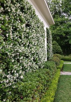 8 Beaming Clever Tips: Backyard Garden Kids Fence backyard garden pergola arbors.Backyard Garden On A Budget Retaining Walls. Privacy Landscaping, Backyard Privacy, Backyard Fences, Garden Landscaping, Landscaping Ideas, Fence Garden, Privacy Shrubs, Pool Fence, Garden Pool