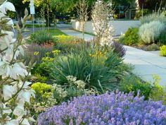 8 easy-care plants for parking strip gardens Easy-care planting ideas Sidewalk Landscaping, Home Landscaping, Short Plants, Easy Care Plants, Landscape Designs, Garden Cottage, Garden Whimsy, Garden Bed, Yard Design
