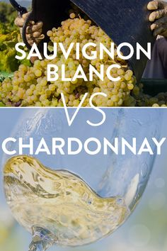 The Differences Between Chardonnay And Sauvignon Blanc | VinePair