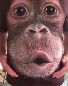 Funny Animal Memes, Cute Funny Animals, Funny Monkeys, Funny Humor, Funny Cats, Funny Video Memes, Really Funny Memes, Funny Images, Funny Photos