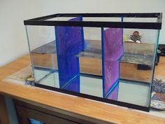 Voz 4 Bettas: Divisores de acuarios de bricolaje bettafishtank #betafish #fishtanks #aquari ... - #acuarios #Aquari #betafish #bettafishtank #Bettas #Bricolaje #de #Divisores #fishtanks #Voz Diy Aquarium, Aquarium Decorations, Aquarium Ideas, Betta Fish Tank, Beta Fish, Fish Tanks, Betta Breeding, Amazing Aquariums, Reptile Room
