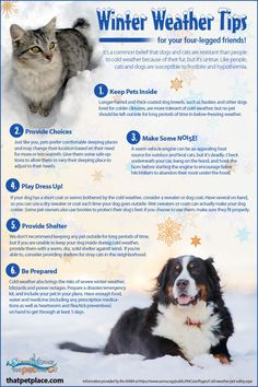 Its cold here in Plano, Texas today! Here are some winter weather tips for keeping your pets nice and toasty.