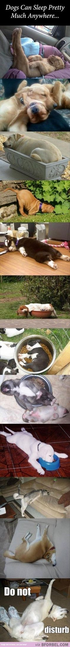 12 Dogs That Can Sleep Anywhere, In Any Position.. by natasha