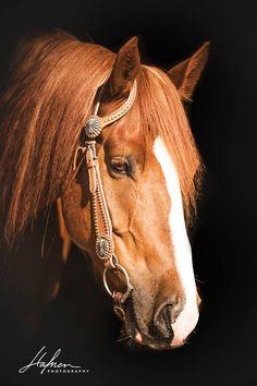 (1) Liberty with Horses - Photos
