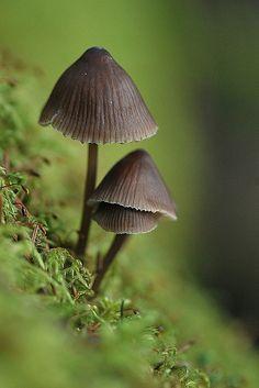 fungi. og how I love little mushies!