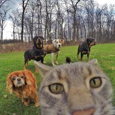 СЭЛФИ-КОТ ЗАВОЕВАЛ INSTAGRAM кот, instagram, selfie, котоселфи, длиннопост