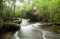 Tranh Stream – The ideal place for you visit when traveling in Phu Quoc Island  #Tranhstream #idealplaceinvietnam #travelinginphuquoc