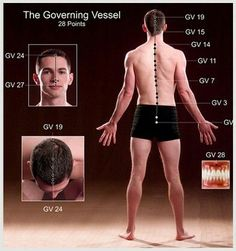 Bladder Meridian found on Sun Total Body Detoxification Acupuncture Points, Acupressure Points, Cupping Therapy, Massage Therapy, Body Detoxification, Health Heal, Traditional Chinese Medicine, Total Body, Physical Therapy