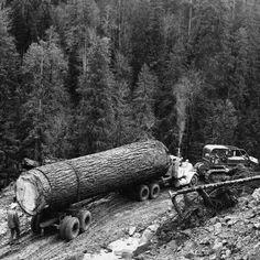 big log Timber Logs, Semi Trucks, Mack Trucks, Big Trucks, Logging Equipment, Custom Big Rigs, Big Tree, Old Trees, Minecraft School