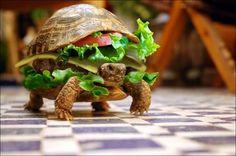 funny animal pics - super burger