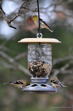 """Made from a chick-feeder that you can purchase for only about 2-3 dollars at a farm supply store.    I REALLY love this project! Be sure to follow the author's link and check out her very cool blog! In her words.....    """"I came up with three different w…"""