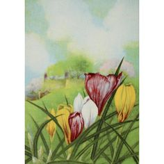 Garden Flowers 1926 Crocus Canvas Art - Myron Van Brunt (24 x 36)