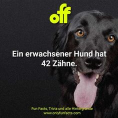 50 unglaubliche Fakten über Hunde - Only Fun Facts Trivia, Animal Facts, Dogs, Animals, Fun Facts, Unbelievable Facts, Pet Dogs, Boyfriend, Facts About Animals
