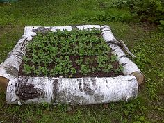 Beautiful raised beds made by repurposing a fallen tree.