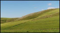 Culture de blé, dans les hautes plaines près de Constantine, Algérie.