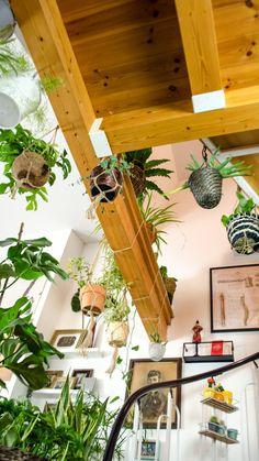 Urban Jungle auch ohne grünen Daumen. Genieße ein grünes Bohemian Jungle Home mit pflegeleichten Zimmerpflanzen. Pflegetipps rund um Monstera, Bogenhanf, Efeutute und Co. Wie oft düngen und gießen? Welche Grünpflanzen reinigen die Luft und welche vertragen auch dunkle Räume? #easyplants #pflanzentipps #plants #indoorplants #plantfluencer #urbanjungle #zimmerpfanzen #grünpflanzen #pflanzen #monstera #bogenhanf Bohemian Living, Boho, Modern Home Furniture, Small Furniture, Hygge, Mid-century Modern, Planter Pots, Inspiration, Interior Design